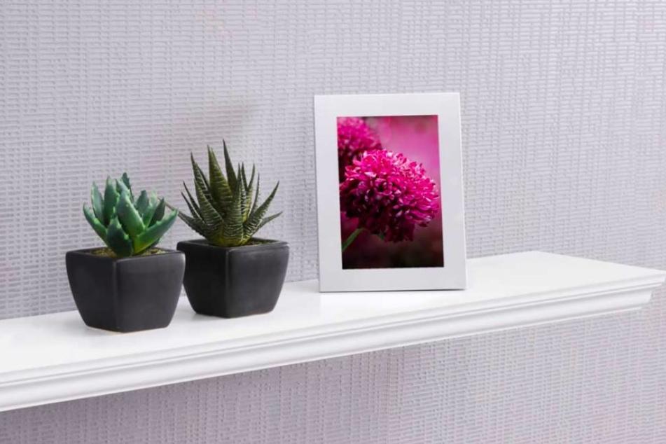 Einfach angebracht: Mit Pflanzen und einem Mini-Regal kann man ohne viel Aufwand die leeren Wände dekorieren.