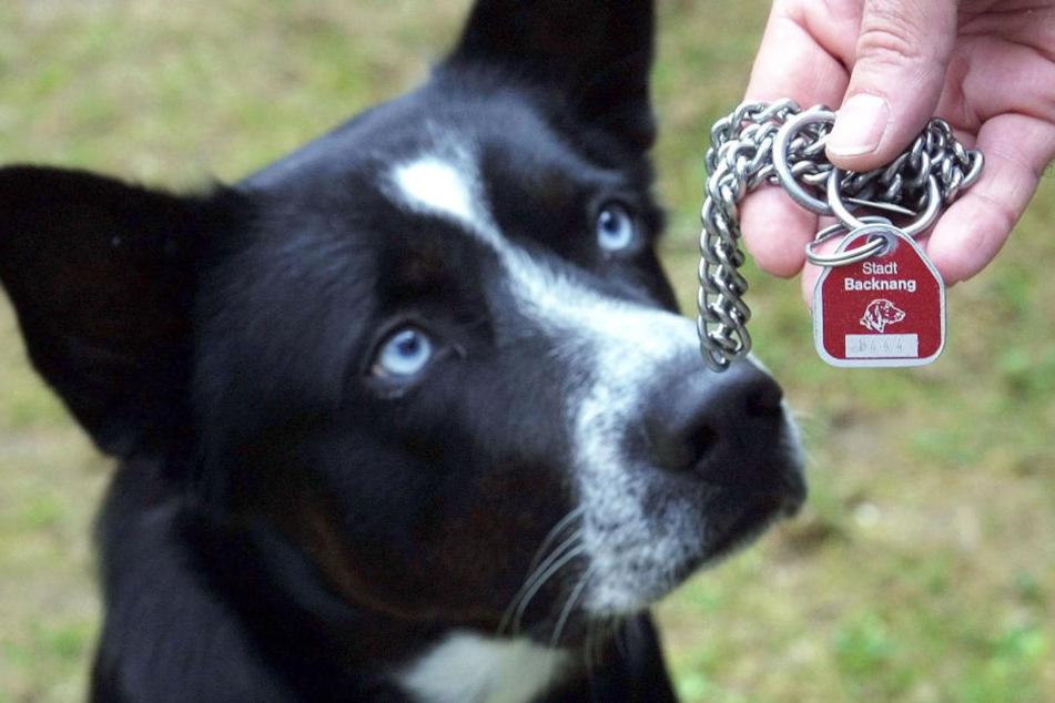 Die erhobene Hundesteuer fällt je nach Wohnort in NRW sehr unterschiedlich aus (Symbolbild).