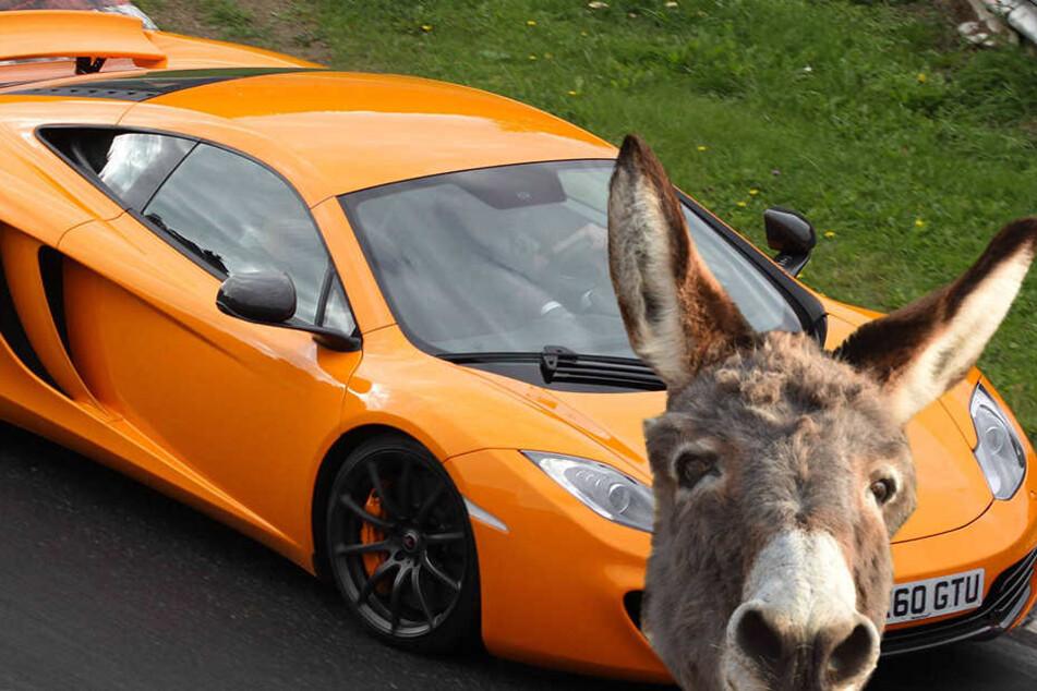 Esel beißt in möhrenfarbenes Auto - Polizei vermutet Verwechslung!