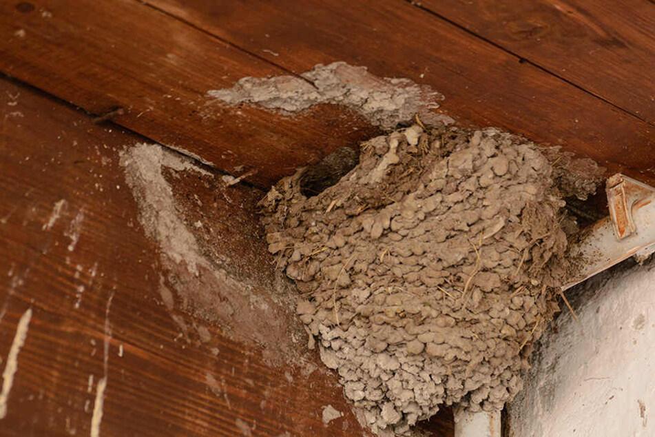 Tierquäler mauern Baby-Vögel ein und schlagen Nester ab