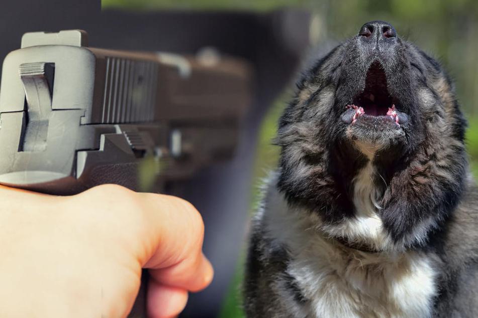 Der angreifende Hund musste vor Ort erschossen werden. (Fotomontage)