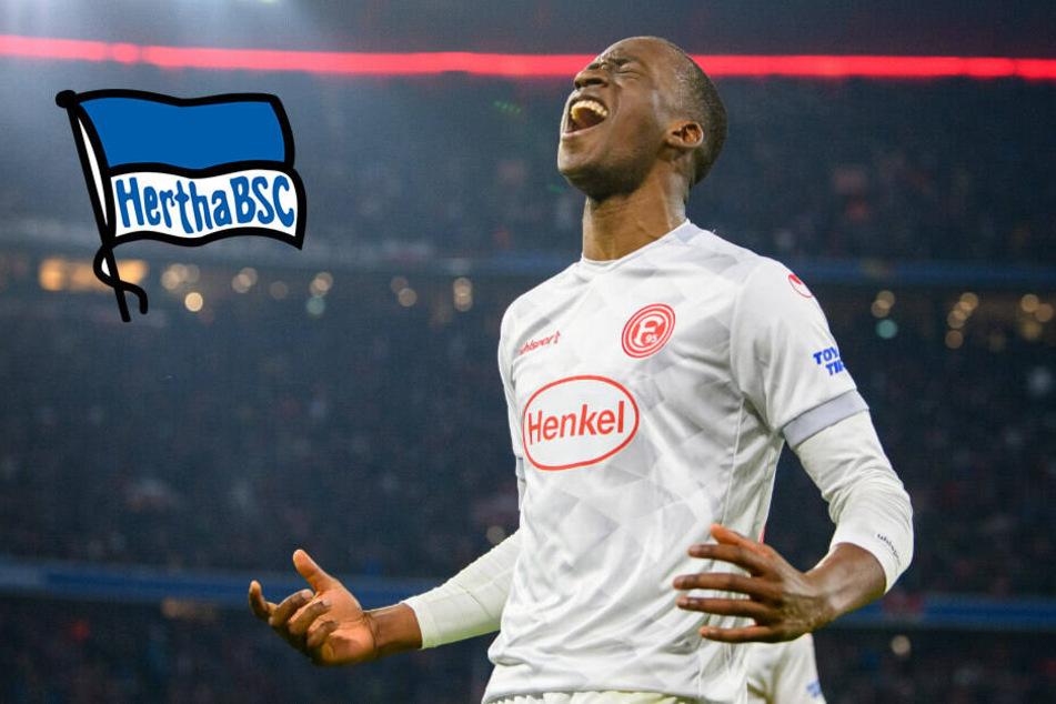 Rekord-Transfer: Lukebakio vor Wechsel zu Hertha