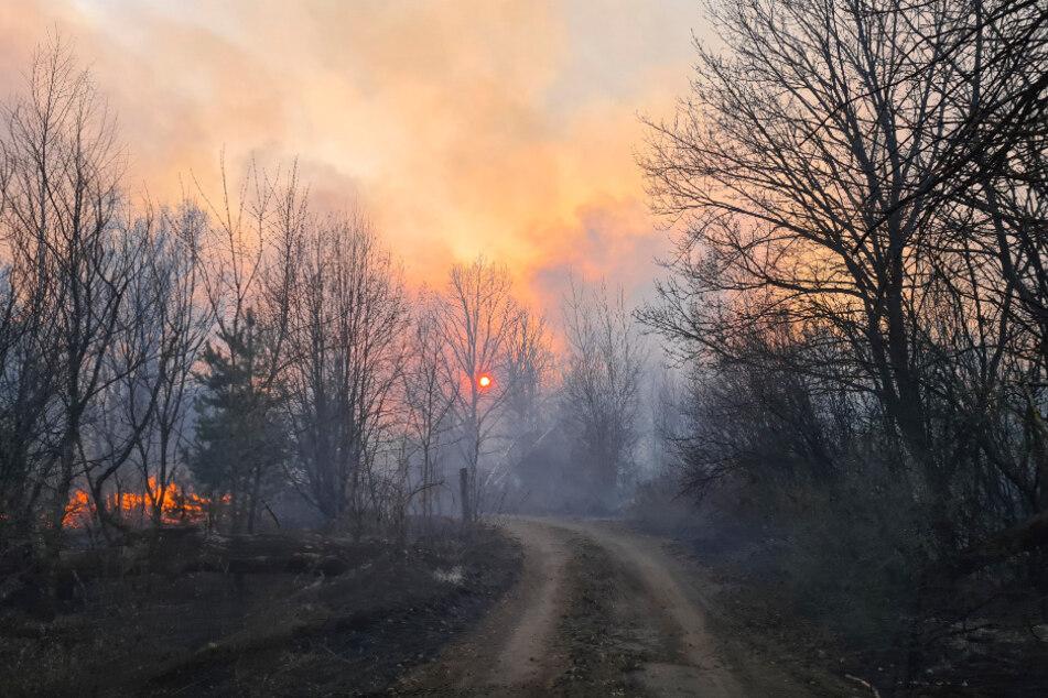 Rauchschwaden steigen von einem Waldbrand in der radioaktiv belasteten Sperrzone um das Kernkraftwerk Tschernobyl auf.