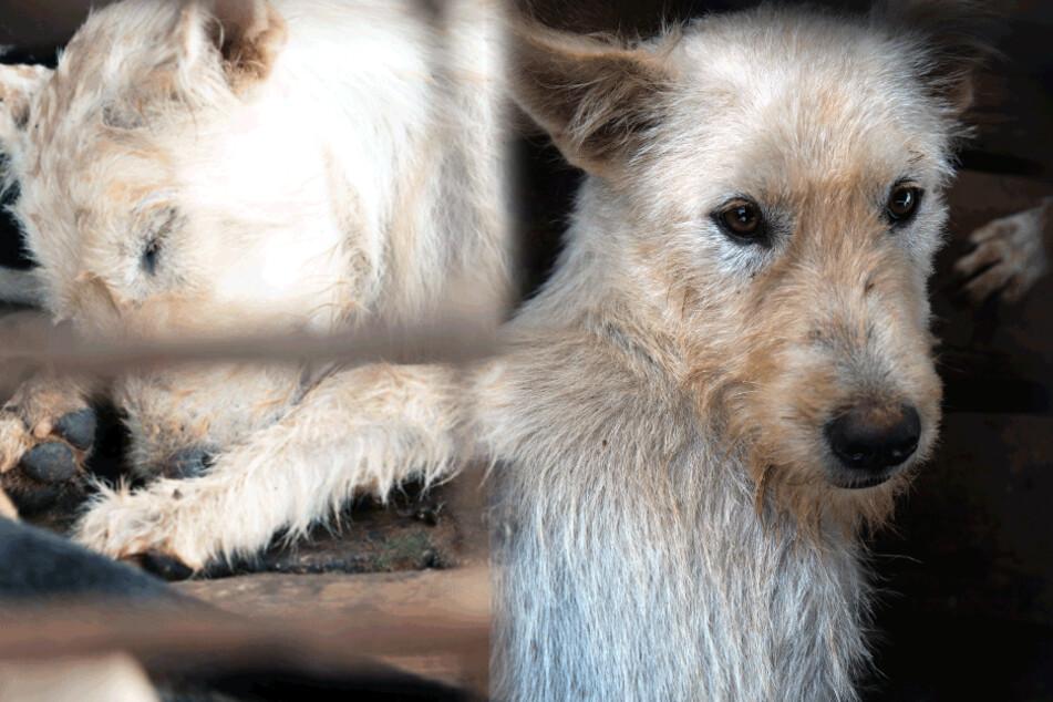Beinahe geschlachtet! Todgeweihter Hund bekommt letzte Chance