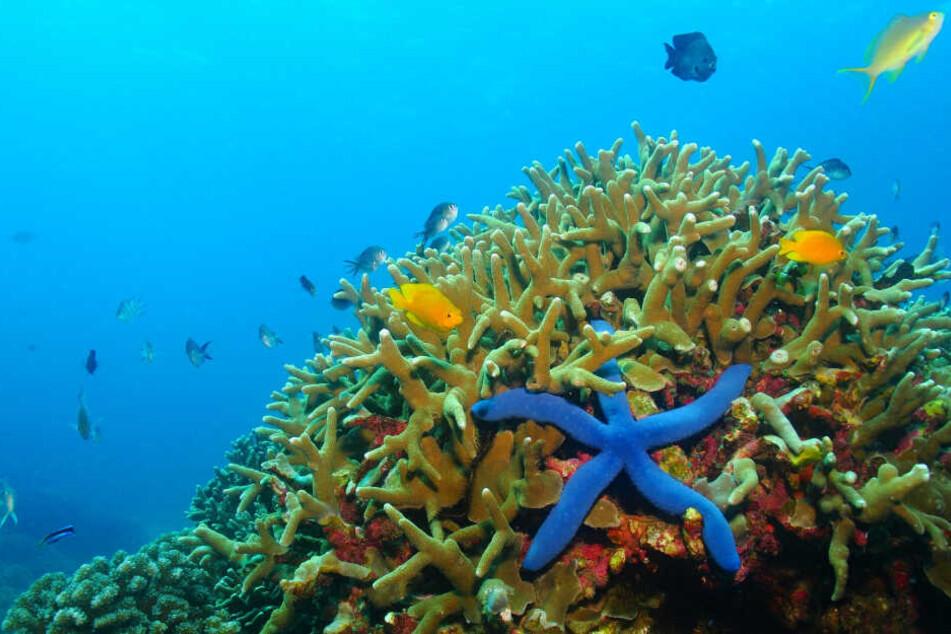 Palaus Regierung möchte die eigenen Ökosysteme schützen.