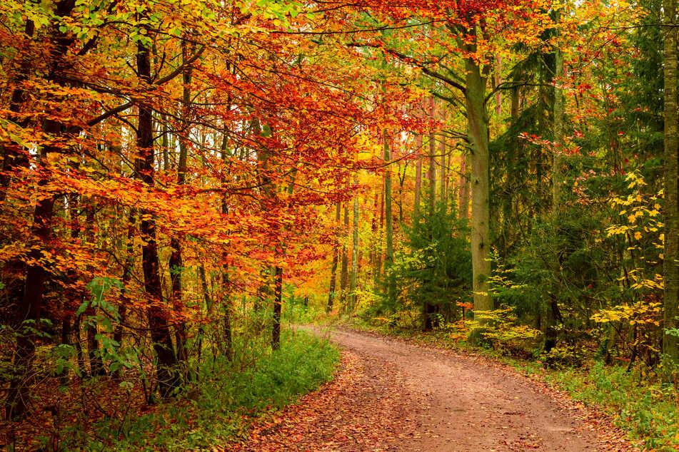 Bei diesem schönen Wetter ist ein Waldspaziergang auf jeden Fall drin. (Symbolbild)