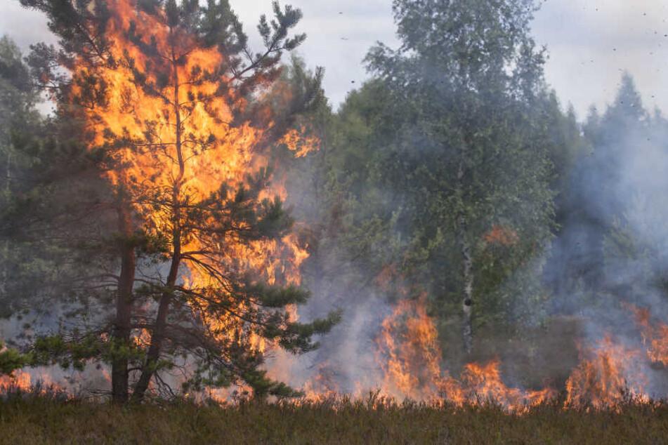 Waldbesucher sind angehalten auf liegen gelassene Glasscherben, Zigarettenkippen und Funkenflug beim Grillen zu achten (Symbolbild).