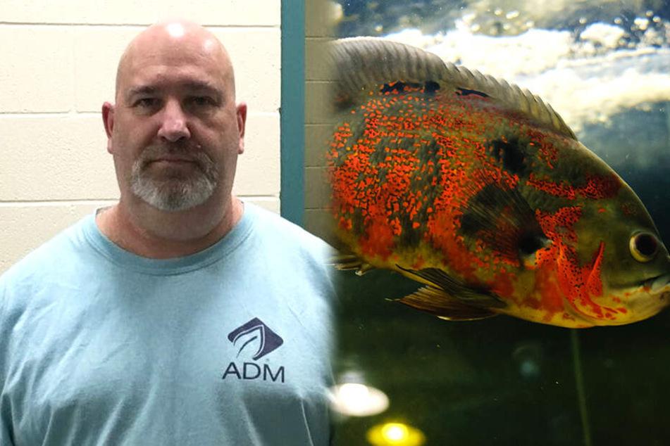 Mann vernachlässigt seinen Fisch, bis dieser ein Loch im Kopf hat