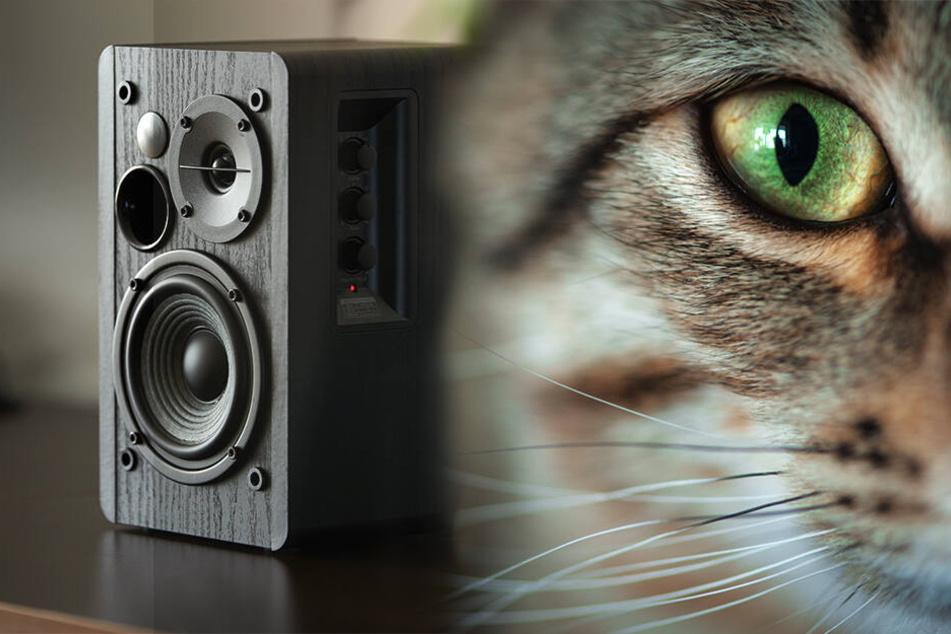 """""""Katzenmusik"""" ertönte in der Wohnung (Symbolbild)."""