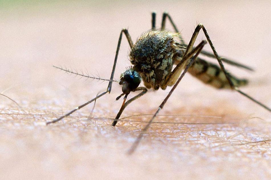 Eine vierjährige aus Italien hatte sich an Malaria infiziert und starb.