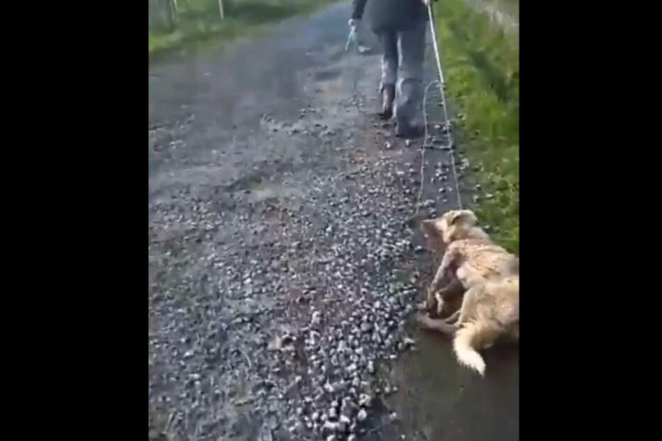 Die Hundedame wird vom beschuldigten Jäger schwer verletzt hinter sich her gezerrt.