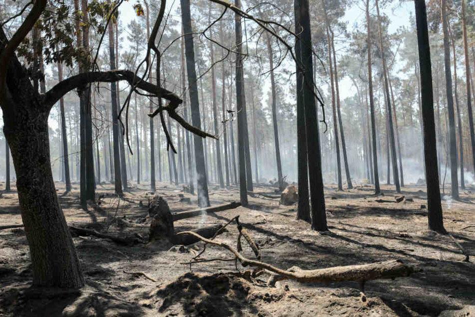 """""""Situation ist brenzlig!"""" Sachsen-Anhalts Wäldern droht ein weiteres Krisenjahr"""