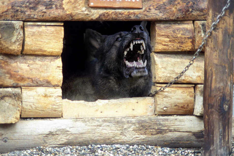 Als die Zehnjährige ihren Kopf in die Hundehütte steckte, biss der Mischling mehrmals zu. (Symbolbild)