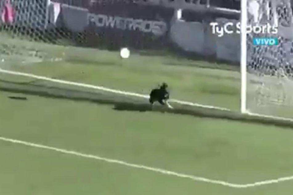 Kurz bevor der Ball ins Tor gehen konnte, rannte der Hund über den Platz und verhinderte den Treffer.