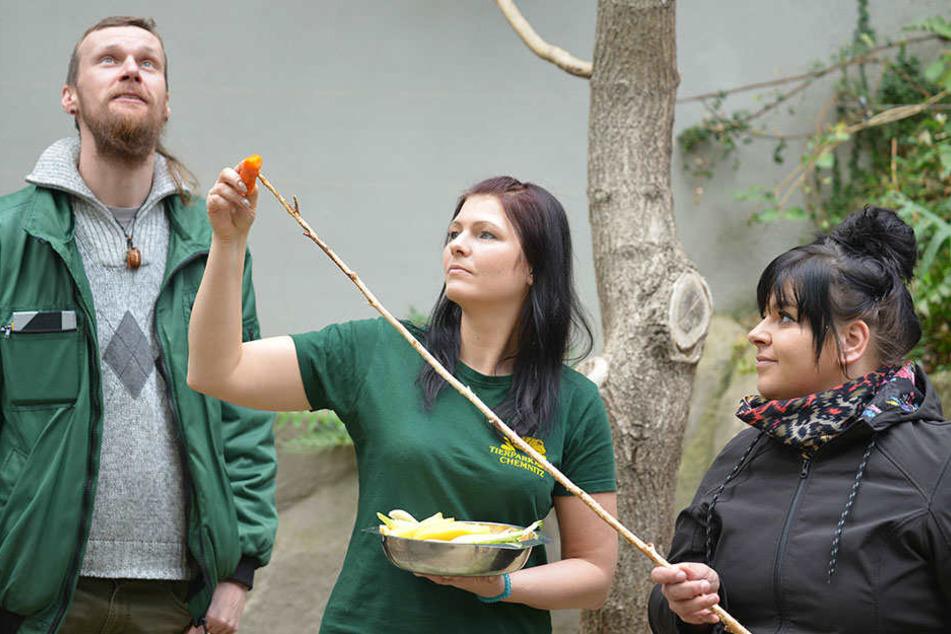 Tierpflegerin Theresa Böhme (31) hilft Besucherin Katja Fuhrmann (30) beim Aufspießen des Futters. Zoopädagoge Jan Klösters hält Ausschau nach dem Faultier.