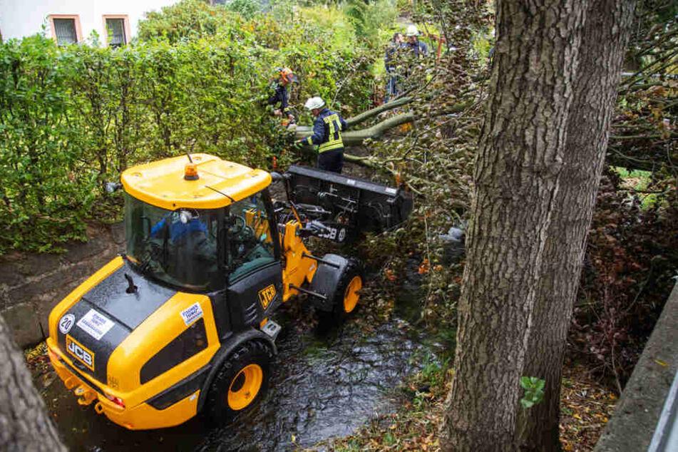 Der Bagger schob in Großharthau einen Baum aus dem Bach Gruna.