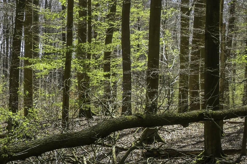 Spaziergänger haben einen Toten in einem Waldstück entdeckt. (Symbolbild)