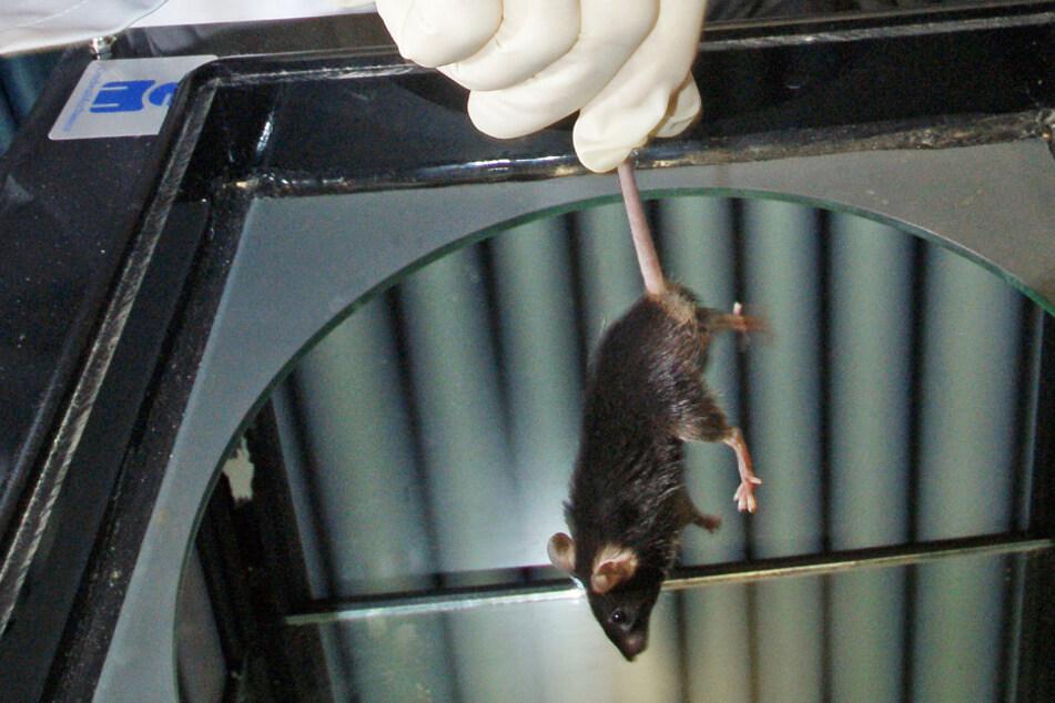 Tierschützer gehen wegen neuer Augsburger Medizinfakultät auf die Barrikaden