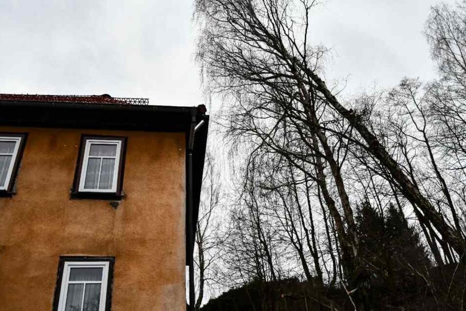 Bewohnerin evakuiert! Baum droht, mitten in Haus zu stürzen