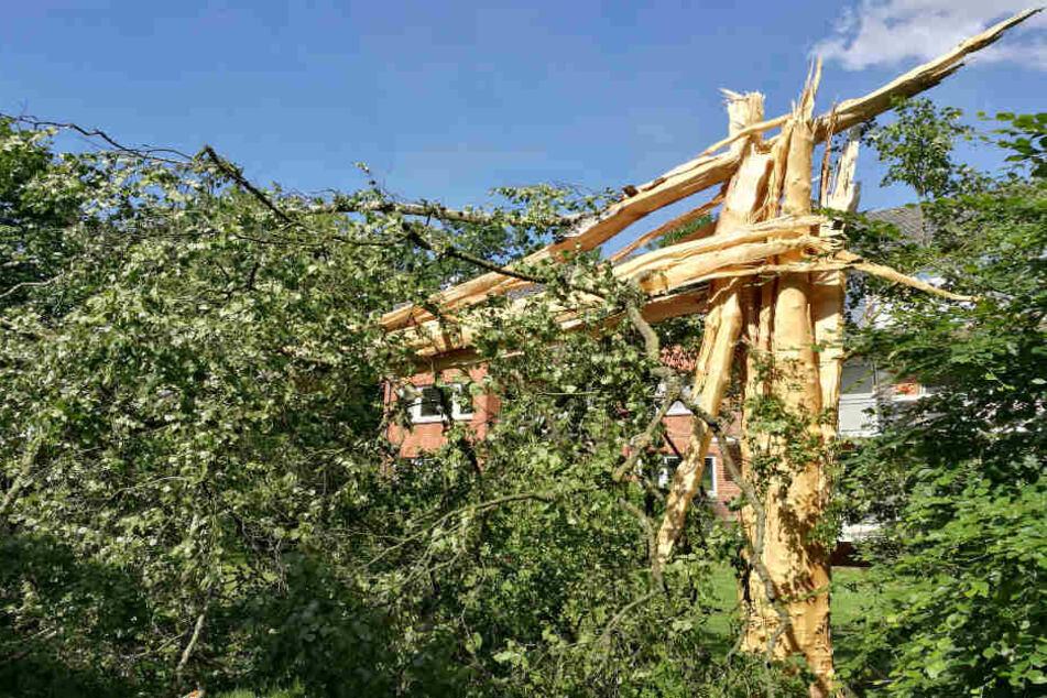 Beim Gewitter in der Nacht von Freitag auf Samstag traf ein Blitz eine große Birke in Norderstedt und zerfetzte sie.