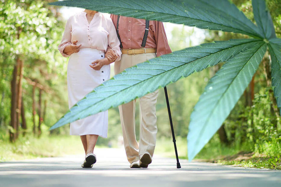 Pilzsucher verpetzen Cannabis-Senioren
