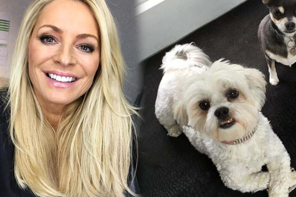 Model kommt nach Hause und überfährt ihren eigenen Hund mit Range Rover