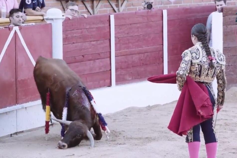 Schockierende Szenen! 15-Jährige metzelt Stier-Kalb mit Messer zu Tode