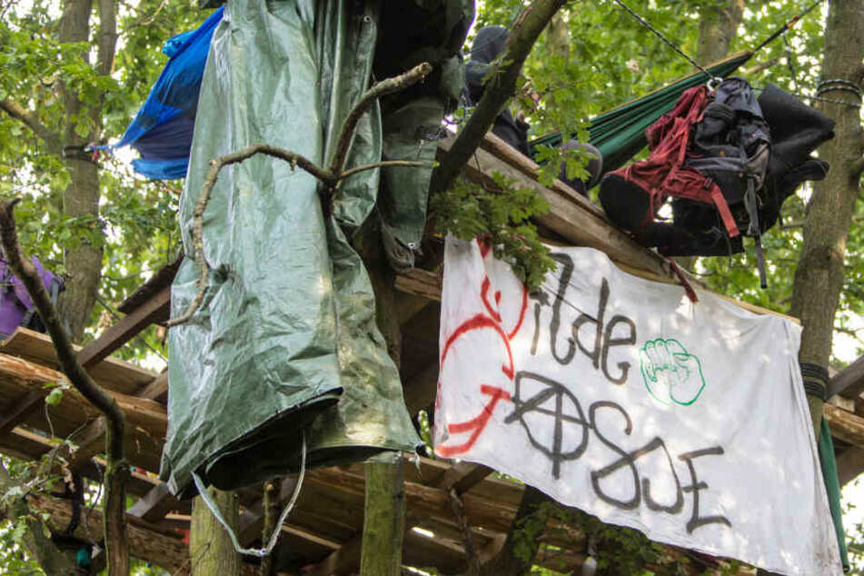 Hamburg: Mehrere Hektar Wald sollen fallen, Aktivisten errichten Baumhaus