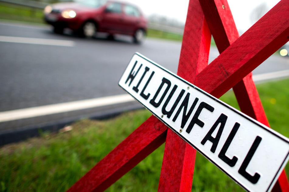 Polizei Thüringen klärt auf: So könnt ihr Wildunfälle verhindern