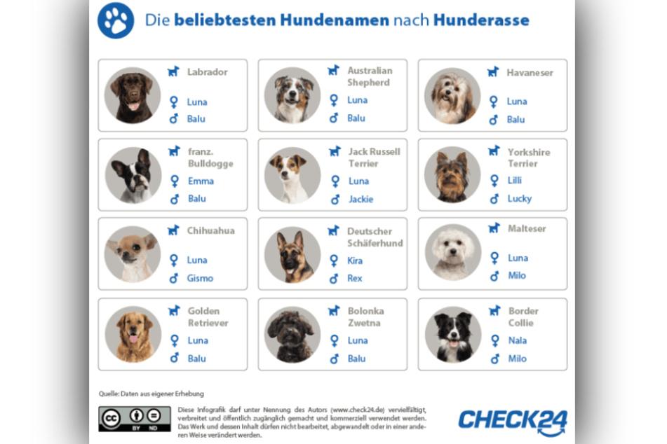 Die beliebtesten Hundenamen je nach Rasse aufgelistet.