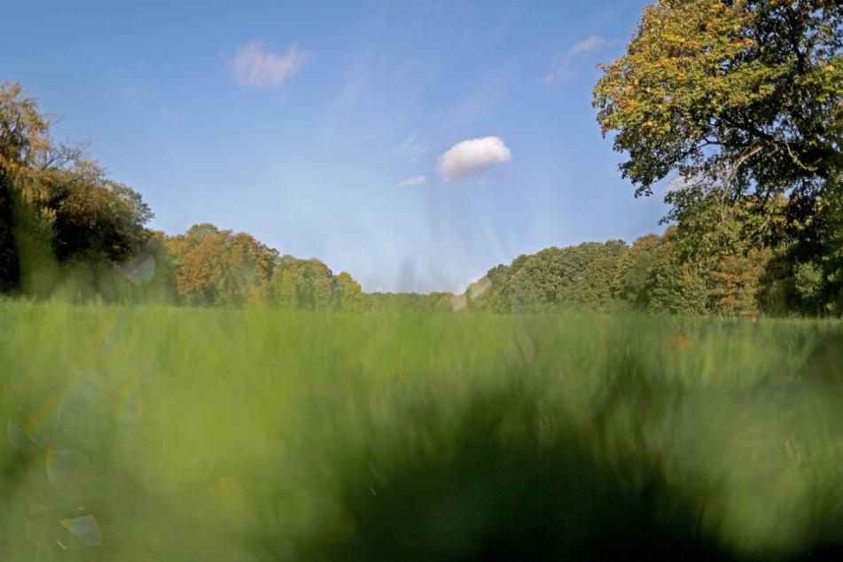 Wolken ziehen über die Gleueler Wiese. Um die Wiese im Grüngürtel gibt es einen heftigen Streit, ob der Naturraum für neue Sportplätze angetastet werden darf.