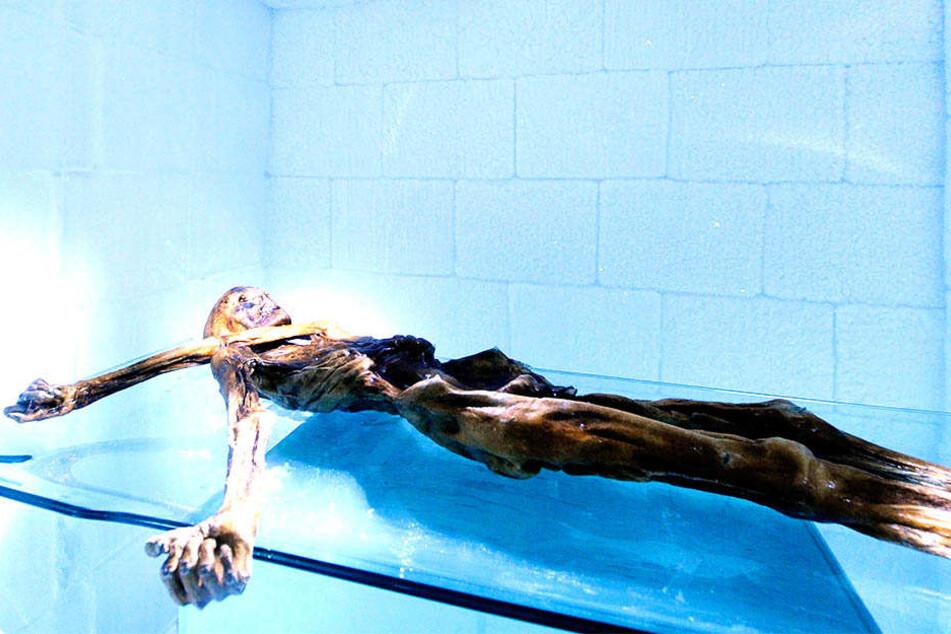 Ötzi - die bekannteste Mumie Europas - liegt in einer Kühlkammer im Archäologischen Museum.