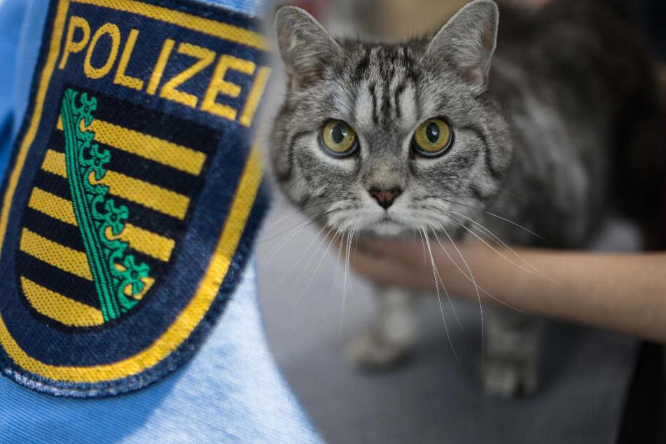 Tierquäler unterwegs? Katze angeschossen, Polizei sucht Zeugen!