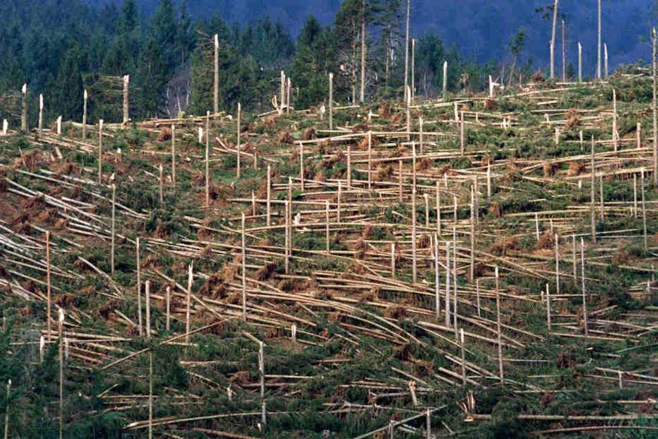 Vor 20 Jahren wütete der Weihnachts-Orkan Lothar: Sind die Schäden noch zu sehen?