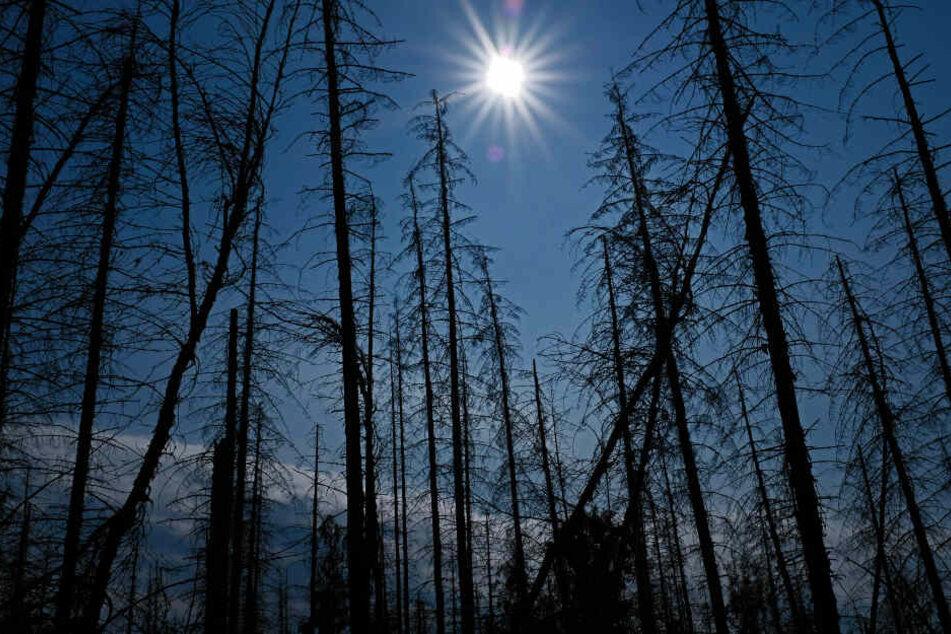 Stürme, Trockenheit und Borkenkäfer schädigen die Wälder erheblich.