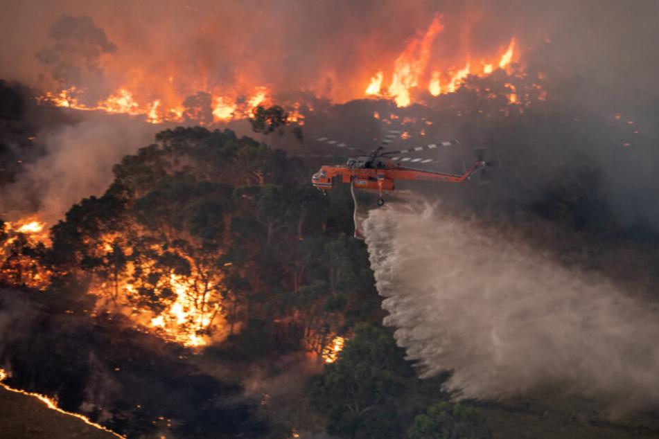 Bedrohlich wüten die Buschfeuer in Australien.