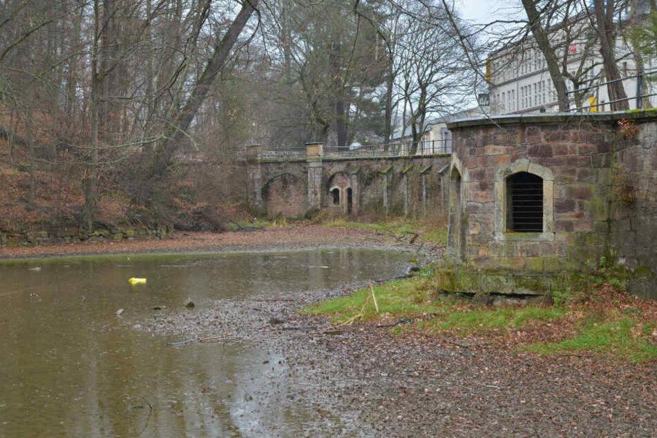 Kein schöner Anblick: Der Teich im Schönherrpark gleicht eher einer Pfütze.