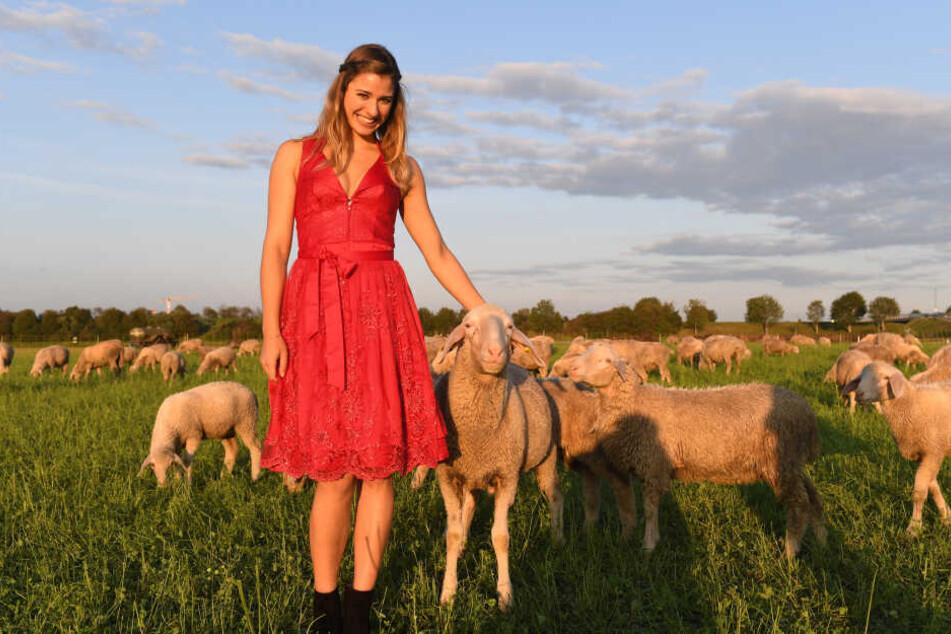 Das Wiesn-Playmate 2019, Stella Stegmann (22), steht auf einer Wiese zwischen Schafen.