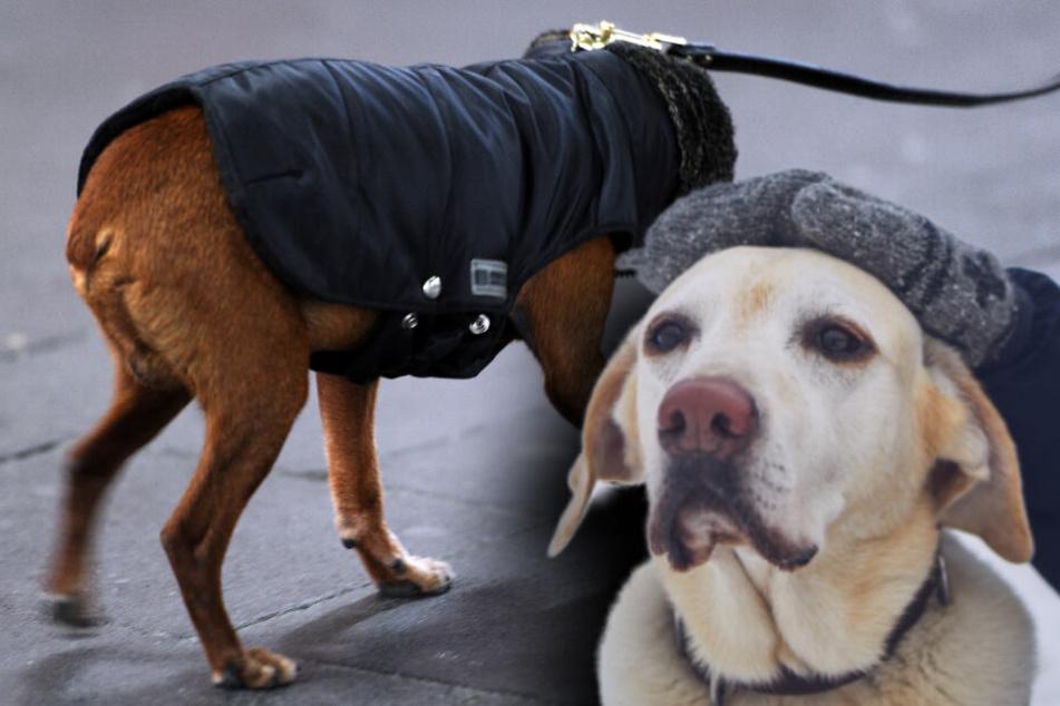 """Warum Dein Hund im Winter besser kein """"Sitz"""" machen sollte"""