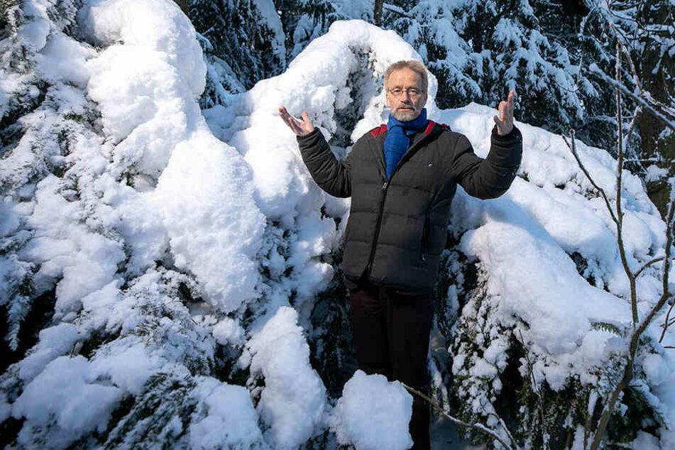 Professor Andreas Roloff (63) erklärt, warum derzeit so viele Bäume unter den Schneemassen zu Bruch gehen.