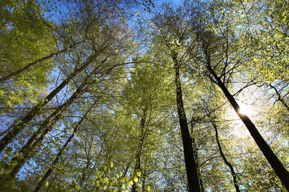 Schwer geschädigt: Wie macht man den Wald fit für die Zukunft?
