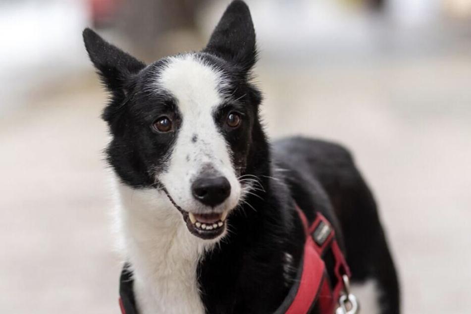 Hund irrte 388 Tage durchs Erzgebirge, bis er seine Familie wiederfindet