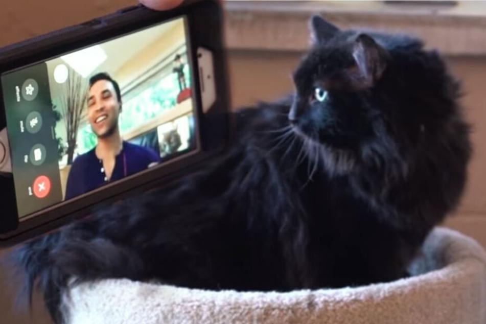 Vermisste Katze taucht nach fünf Jahren plötzlich ganz woanders auf