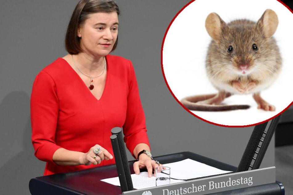 Die Mäusefängerin: Die Linken-Politikerin Anke Domscheit-Berg fing in eineinhalb Jahren bereits 19 Mäuschen mit Lebendfallen. (Symbolbild/Bildmontage)