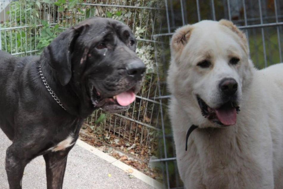 Zwei Hunde, zwei Schicksale, ein Wunsch