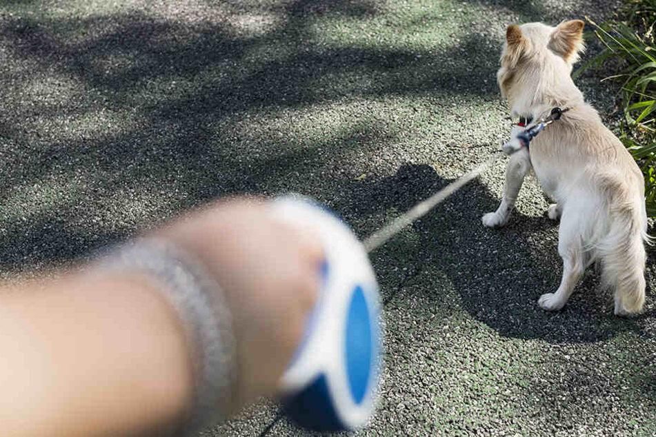 Eine 62-Jährige Frau wurde beim Spazierengehen mit Hund niedergeschlagen.