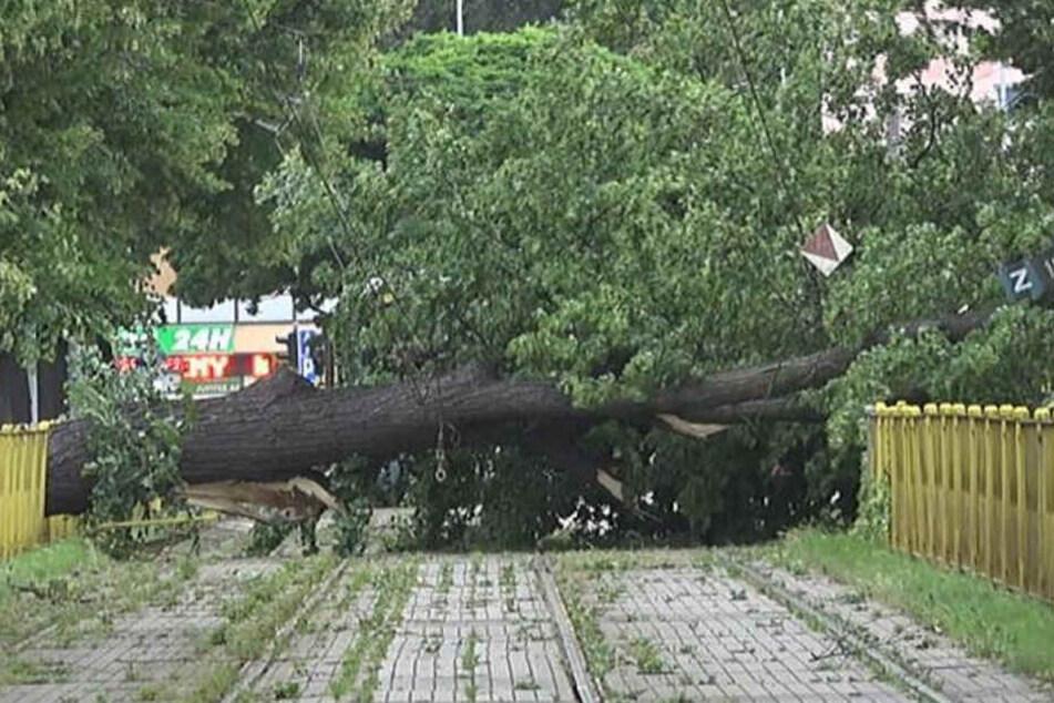 Heftige Unwetter haben in Polen schwere Schäden angerichtet.