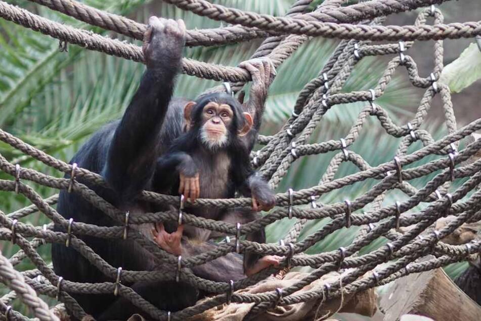 Makeni hat Bock auf klettern - und feiert demnächst seinen ersten Geburtstag.