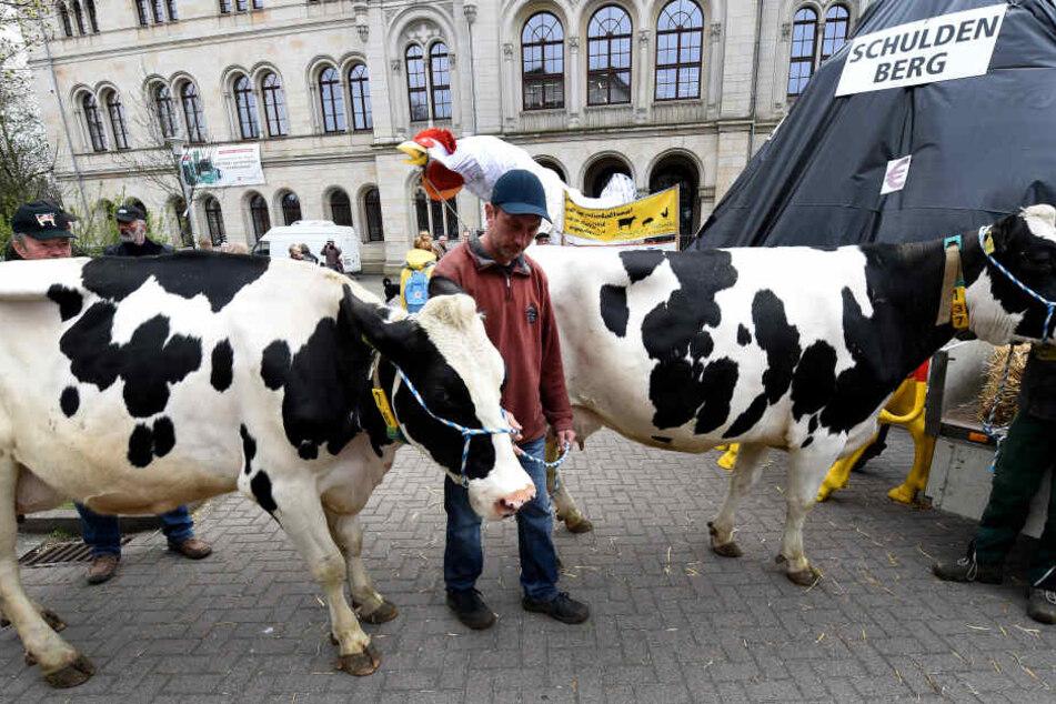 Milchbauern fordern ein Krisenmanagement zur Regelung der Milchmenge in der EU. Deutschlands Milchbauern beuten sich selbst aus - in zwanzig Jahren könnte es kaum noch Milcherzeuger geben. (Archivbild)