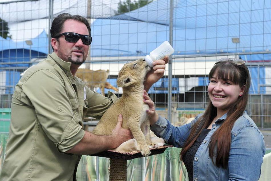 Die Löwenbabys sind die Stars im Circus Krone. Martin Lacey (40) zieht die beiden mit der Flasche auf. Redakteurin Caroline Staude durfte mit füttern.